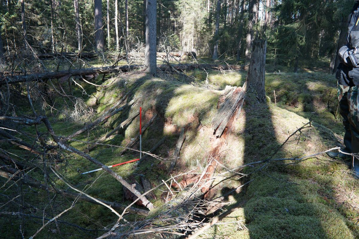 W trakcie badań weryfikacjom poddawane były nie tylko kopce, ale również inne świadectwa działalności człowieka na terenie Puszczy.
