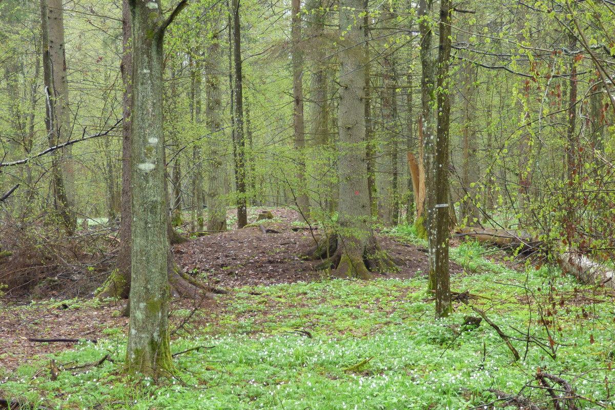 Zespół kopców, wiosenna wegetacja uwidacznia ich kształt.