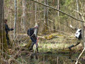 Wysoki poziom wód gruntowych po wiosennych roztopach utrudniał niekiedy dotarcie do badanych miejsc.
